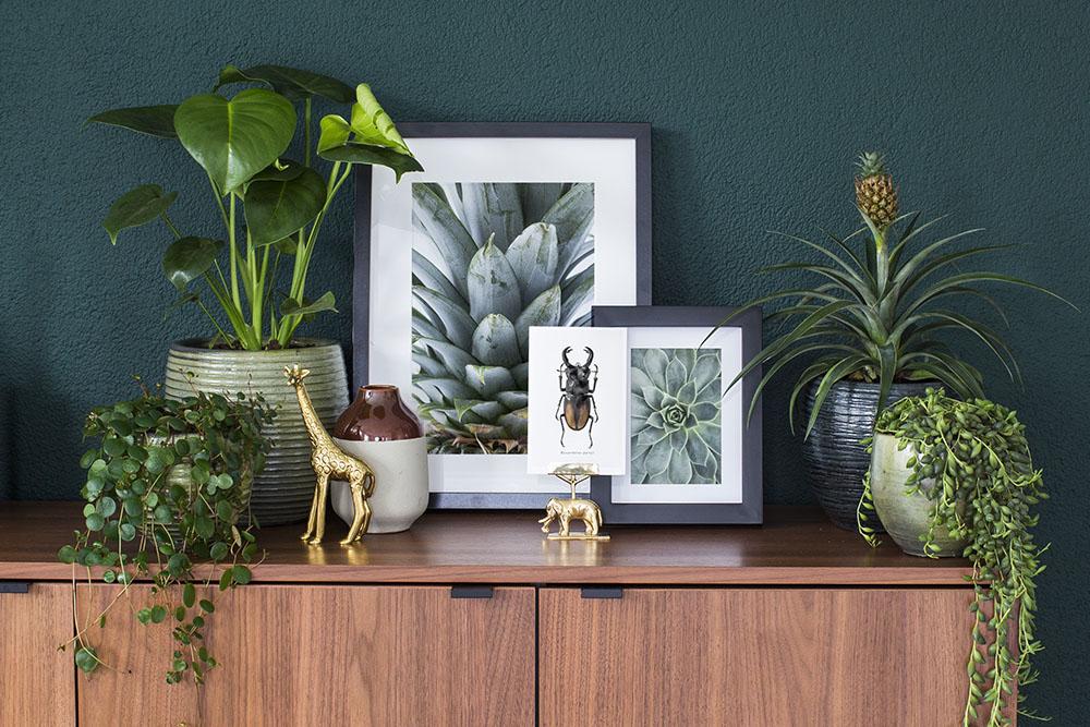 fotowand met ananas en succulente