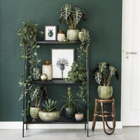 hangplanten, succulente en botanische posters