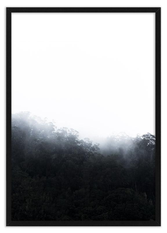 Regenwoud in de mist