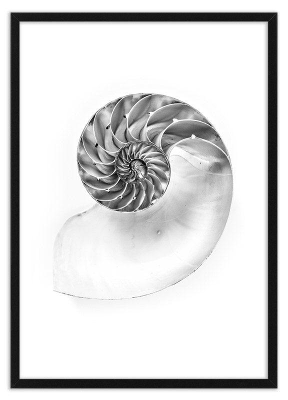 Poster schelp Nautilus
