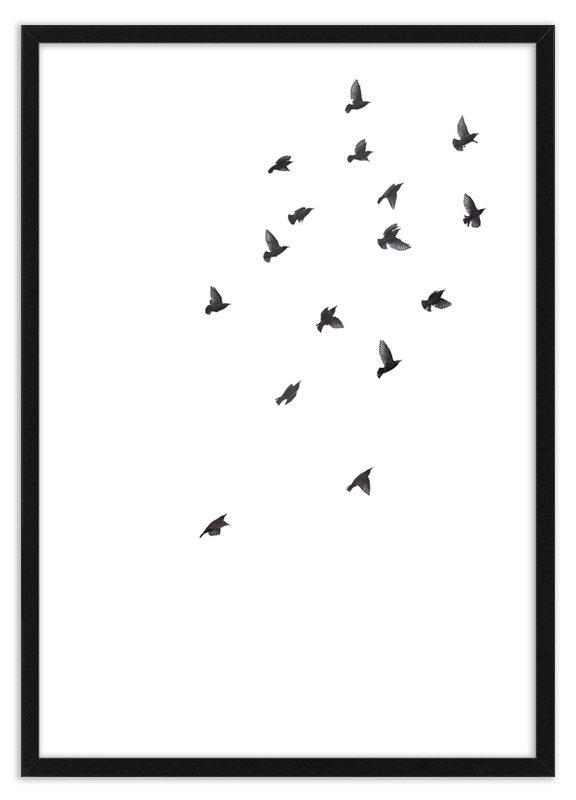 Poster vogels spreeuwen