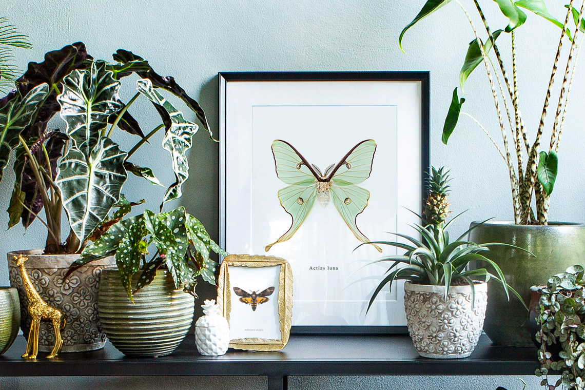 vlinder posters top 5