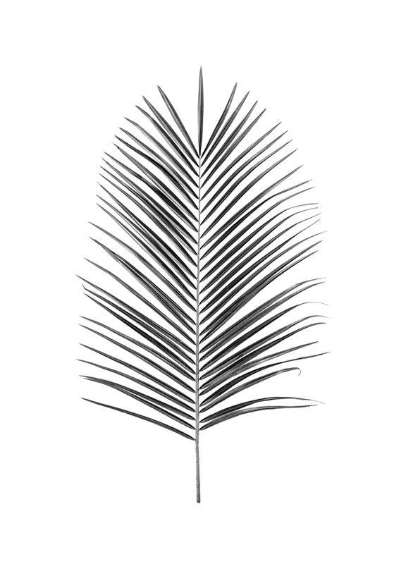 botanische print van een palmblad