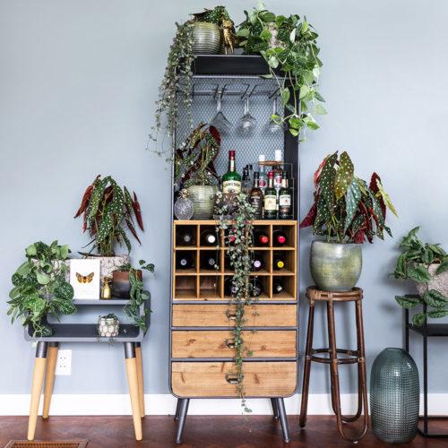 inspiratie drankkast met Begonia Maculata planten