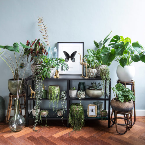 inspiratie woonkamer zwarte vlinder print in urban jungle