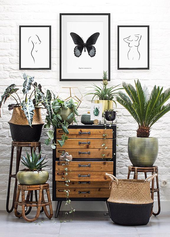 Poster vlinder Papilio rumanzovia