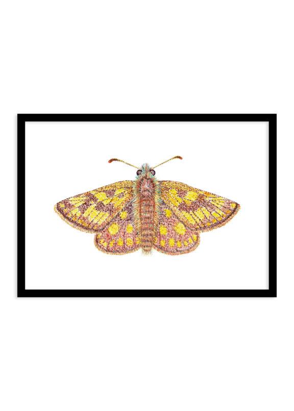 Bont dikkopje vlinder